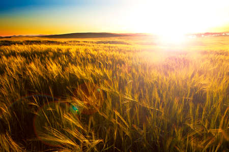 agriculture: Fields and sunset.Agricultural landscape