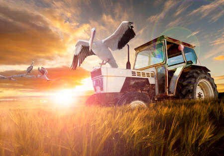 dreamscape: Wheat  fields, exotic birds and tractor.Rural travel concept Stock Photo
