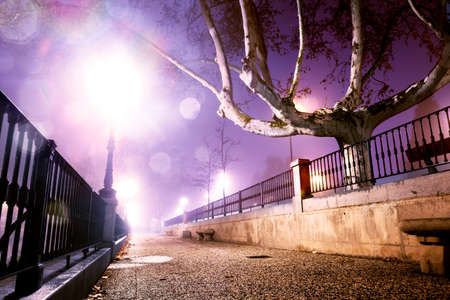 alley: City street at night .Trees,wall and lamppost