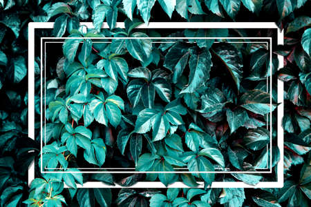 Abstract nature background and frame.Leaves and vegetation artwork and layout.