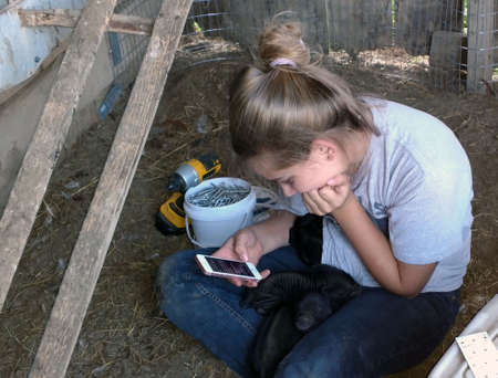 Young blonde girl sitting in barn stall looking at phone with piglets in lap Reklamní fotografie