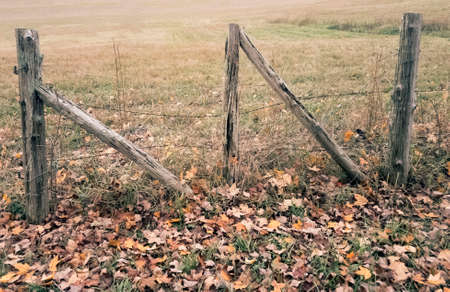 Cedar fence posts and double gate brace of rusted barbed wire fence and leaf strewn foreground