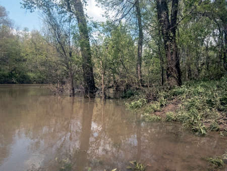Partially submerged trees on flooded river bank