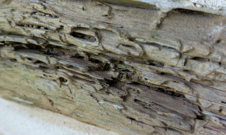 Close-up of weathered, decayed hand hewed log Stock Photo