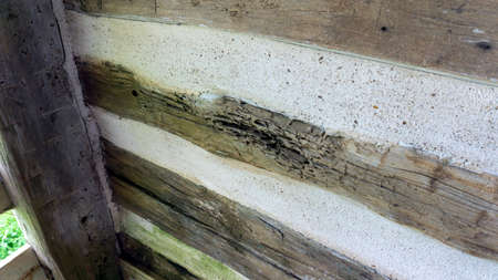 Close-up of decayed hand hewed log set in cabin wall Stock Photo