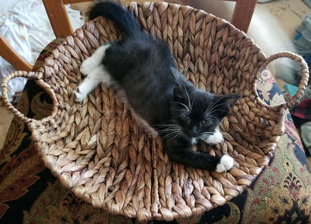 Black kitten with white feet in woven basket