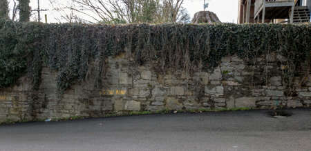 Gray stone wall on side of road overgrown with green ivy