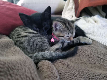 One black and one grey striped kitten sleeping on a blanket