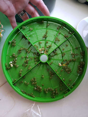 Spent Mung bean hulls in green plastic tray Stock Photo