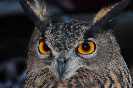 the owl eyes