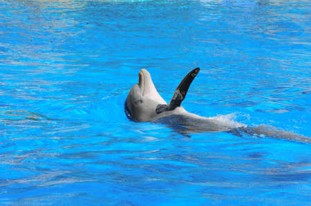 echolocation: Swimming Dolphin Stock Photo