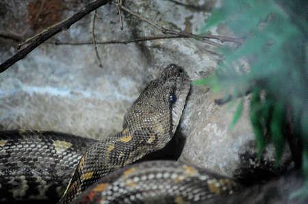 snake Stock Photo - 15378901