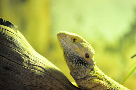 Forest Reptile Stock Photo - 15385297
