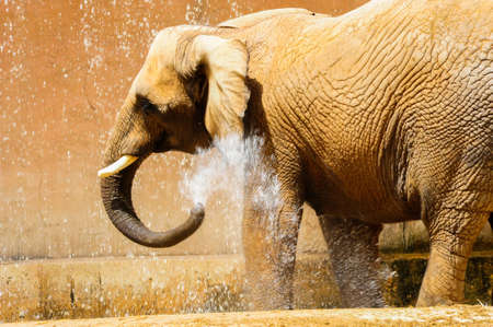 elephant bath Stock Photo - 19458433