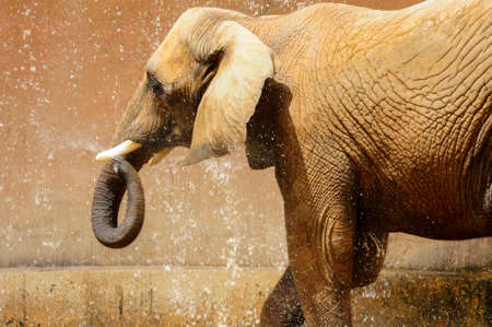 elephant playing water Stock Photo - 19458422