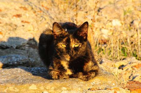 Cat Sun