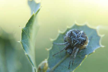 arachnids: PHOTO macro closeup of spider