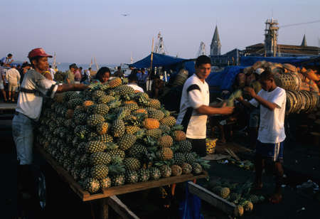 belem:  Ver o Peso Market (1668)   Placing pineapple  in place at dawn.  BELEM (Amazonas).BRAZIL Editorial