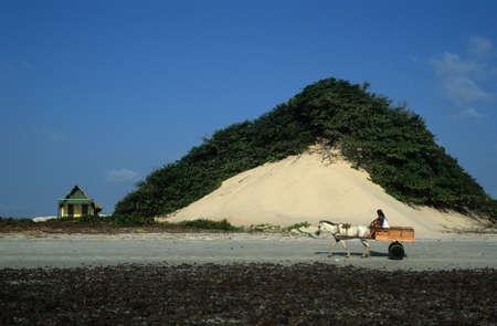 belem: Cart on the beach.ALGODOAL ISLAND (Amazon). BRAZIL Editorial