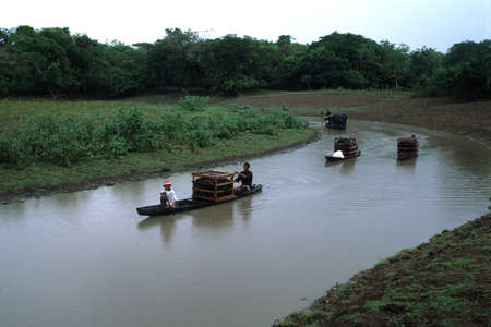 trabajo: BRAZIL (Amazonas). State Pará. Marajó Island - archaeological campaigns. MARAJOARA CULTURE (5 th - 14 TH century ).Urns carrying on the Camutins river.