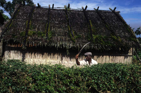 EQUATORIAL GUINEA. South Bioko. MOCA ; Man with machete cutting a hedge.