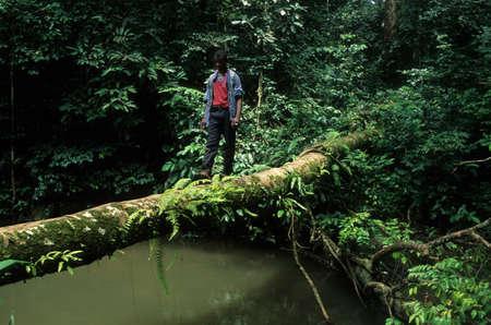 "Joven cruzando un río por un tronco de árbol. ""Monte Alen Parque Nacional"" Continental GUINEA ECUATORIAL Región Editorial"