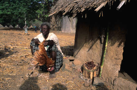rites: SENEGAL. Tambacounda Region  ( Bassari Country )  BEDIK    Village of Iwol   ; Chicken slaughter animist rite.