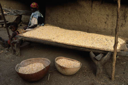 anthropological: SENEGAL. Tambacounda Region   ( Bassari Country )  BEDIK    Village of Iwol   ;  Woman drying corn in front of his hut.