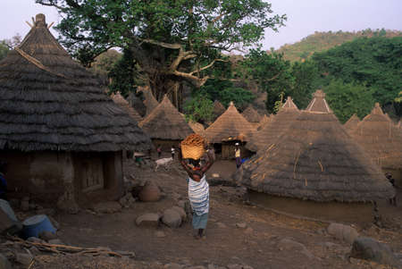 SENEGAL. Tambacounda Region ( Bassari Country )  BEDIK    Village of Iwol  ; View of village. Women carrying yams. Editorial