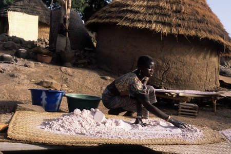SENEGAL. Tambacounda Region Bassari Country  BEDIK   Village of Iwol  ; Girl putting on dry ground millet.