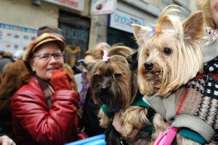 patron: Madrid , SPAIN - 17 JANUARY ,2011. -  SAN ANTON Church   Festivity of St. Anton ( Animals Patron ) on January 17  .