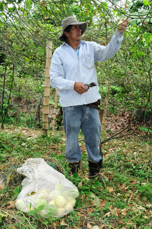 huila: Maracuja  in RIVERA . Department of Huila. COLOMBIA Editorial