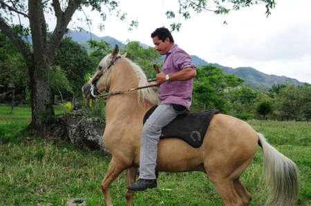 huila: Paso fino horse in RIVERA . Department of Huila. COLOMBIA