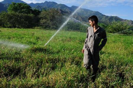 huila: Sprinkler irrigation in RIVERA . Department of Huila. COLOMBIA