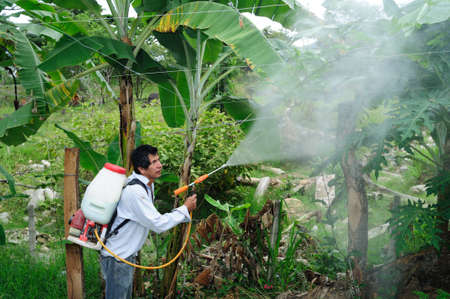 Maracuya plantation fumigating in RIVERA . Department of Huila. COLOMBIA Stock Photo - 15132015