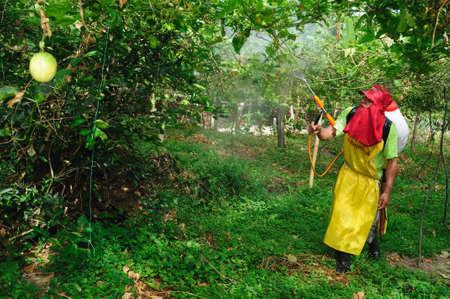 huila: Maracuya fumigar las plantaciones en RIVERA. Departamento del Huila. COLOMBIA Editorial