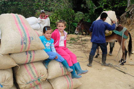 Coffee .Road - Aguas Calientes in RIVERA . Department of Huila. COLOMBIA
