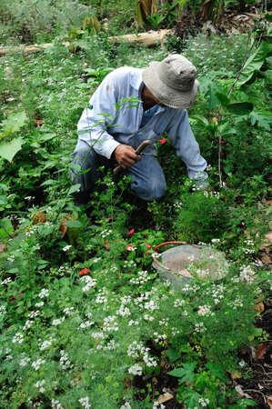 huila: Fertilizer use on farm in  RIVERA . Department of Huila. COLOMBIA
