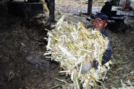 san agustin: Panela (ca�a de az�car) en Isnos (San Agust�n). Departamento del Huila. COLOMBIA Editorial