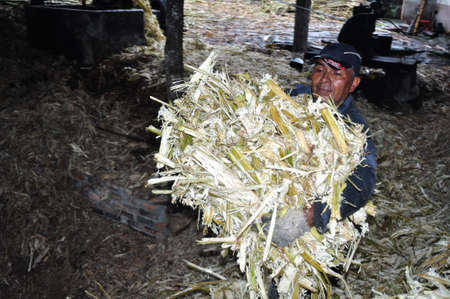 humo: Panela   sugarcane   in ISNOS   San Agustin    Department of Huila  COLOMBIA