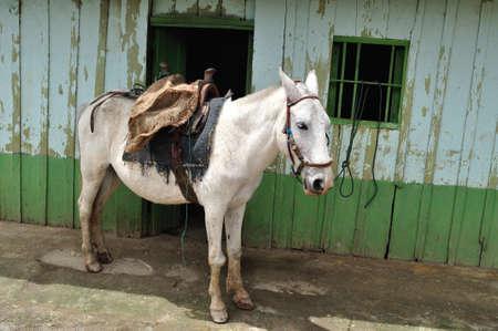 san agustin: Trabajo de campo Caballo en BORDONES Departamento de Huila COLOMBIA San Agustin Foto de archivo