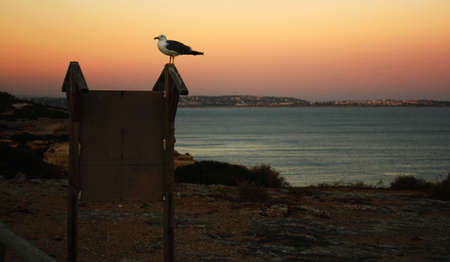 sentry: Seagull as a sentry south coast