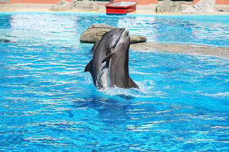 echolocation: Dolphins Dance Stock Photo