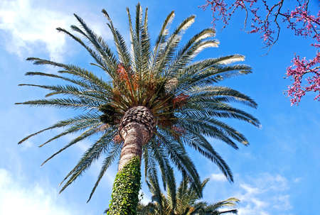 Viewed under a beautiful palm tree with the trunk wrapped in a green creeper Stock Photo - 9102047