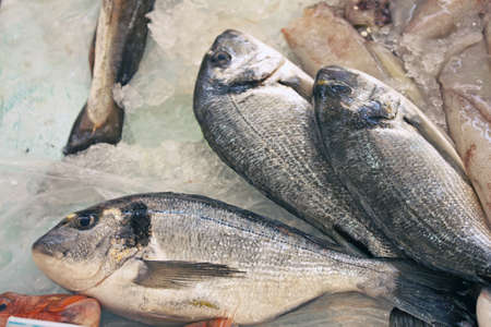 Three silver fish, on the ice, at the local market  Stock Photo - 9377094