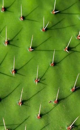 intimidating: Cactus thorns graphic detail                                Stock Photo