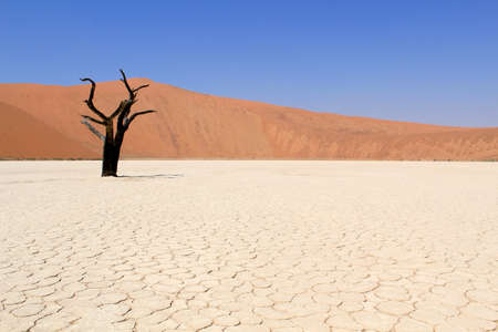 Sossusvlei dead valley landscape in the Nanib desert near Sesriem, Namibia  photo