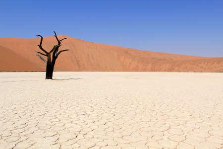 Sossusvlei paisaje del valle muerto en el desierto cerca de Nanib Sesriem, Namibia