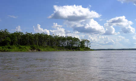 Amazon river margim riverbank and forest                                photo