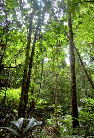 Amazon jungle vegetation pattern